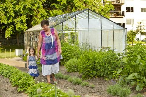 Lokalproducerade grönsaker året runt med smart återvinning av värme