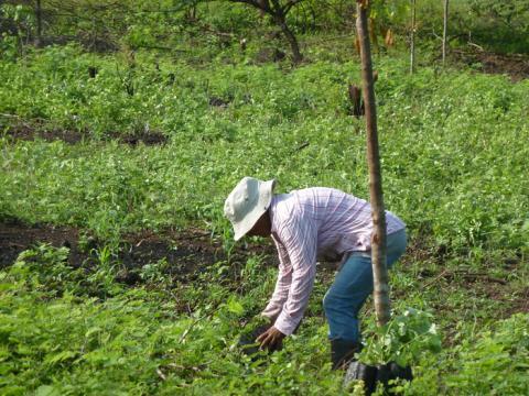 Trädplantering bekämpar fattigdom