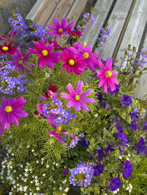 Sommerkrukke med pyntekorg, femtunge, Bacopa og petunia