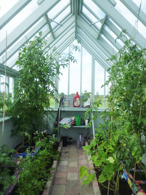 Växthus med stomme i svensk fura