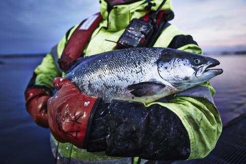 Certifierad fisk och skaldjur nu på världens alla IKEA varuhus