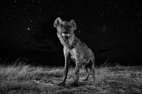 Will Burrard-Lucas, Spirit of the Night
