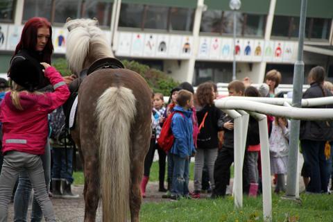 Islandshästar gjorde succé på Täby Galopp