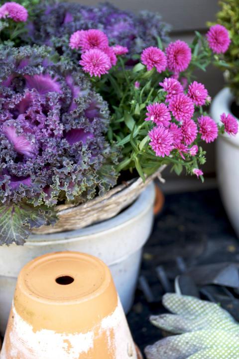 Månadens blomma¬ – oktober 2011