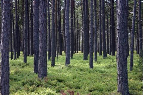 Digital kassabok för skogsägare