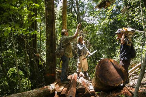 Sådan arbejder Verdens Skove med FSC i Latinamerika