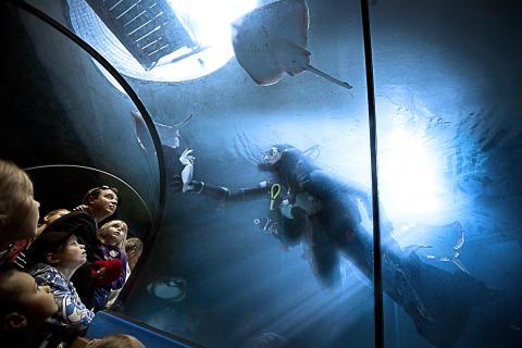 Dykare matar rockor i tunneln på Havets Hus