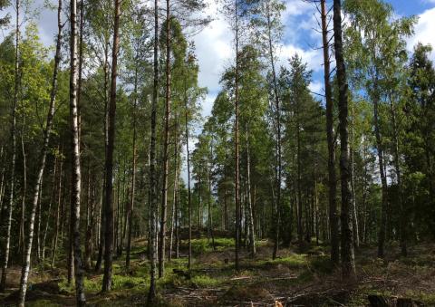 Pressinbjudan: QR-koder ska locka unga ut i naturen
