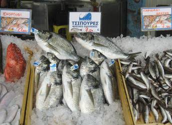 Greek producers warn of new bass, bream price crash