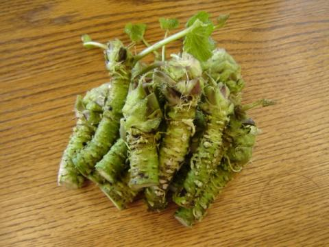 Wasabi Market to Account to US$ 590.8 Mn by 2027 : Key Player are World Wasabi, Clearspring, Eden Foods, KINJIRUSHI and Oregon Coast Wasabi