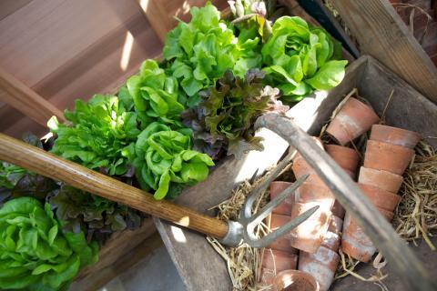 Trädgård odla