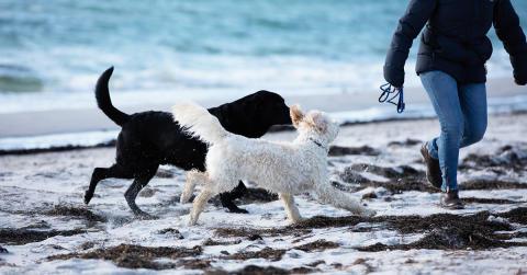 Ny forskning banar väg för att behandla cancer hos hundar