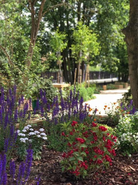 190604 Crofton Park garden 1