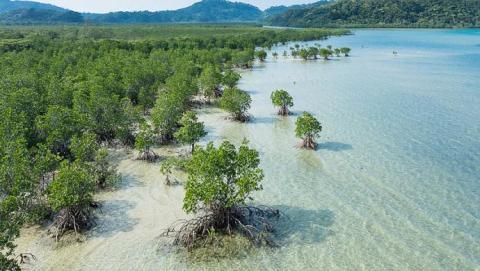 Ny rapport: Natur beskytter bedre mod oversvømmelser end mure