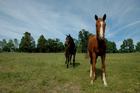 Hästnäringens Smittskyddskommitté: Hästnäringen får gemensam smittskyddspolicy