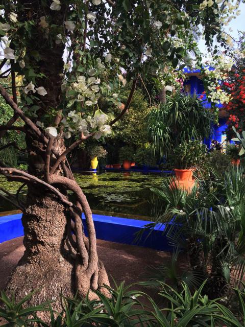 Marrakech Garden Inspirations