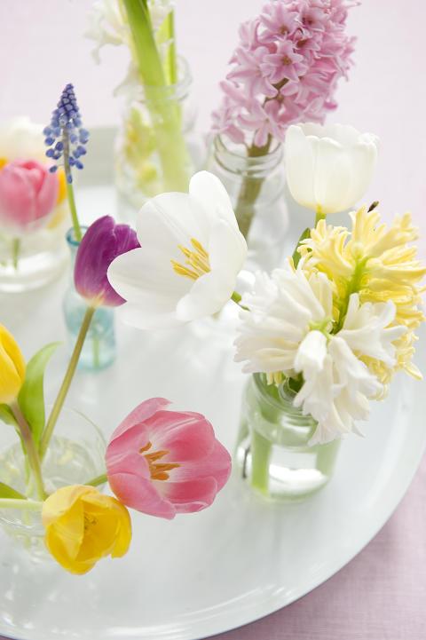 Bricka med tulpaner, pärlhyacint och hyacinter.