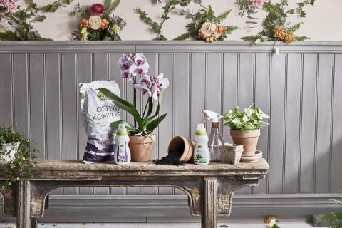 Romantisk lantidyll  - orkidé och peperomia