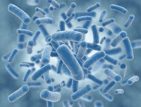 PorcBoost® EB reduces E. coli-induced diarrhea piglets