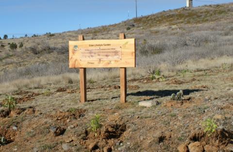 Solresor har planterat mer än 30 000 träd