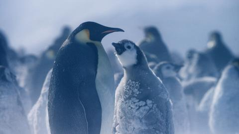 Hostile Planet-luontodokumenttisarjan Napaseutu-jaksosta , National Geographic