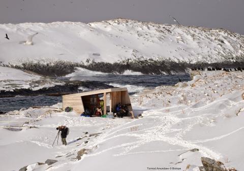 Auch im Winter finden Ornithologen auf Hornøya /Finnmark Schutz und Aussicht