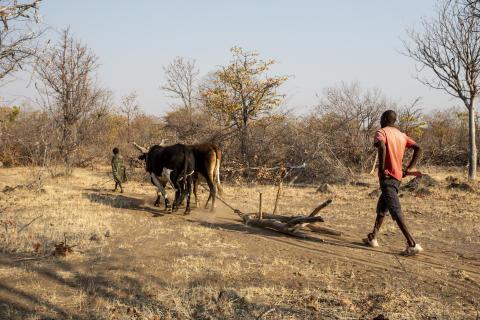 Angola: Bönder riskerar att drabbas av svält