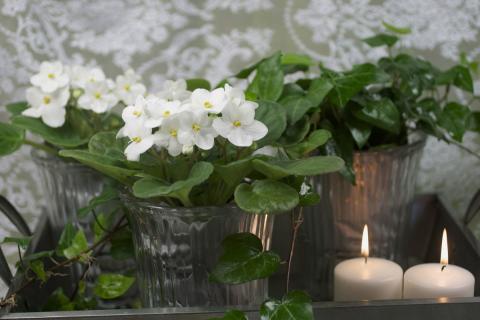 Månadens blomma - januari 2012