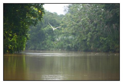 Regnskovsflod i Panama