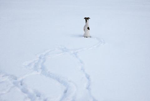 Hunden som kom in i kylan, affischbild