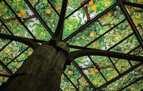 Citrusträd i taket