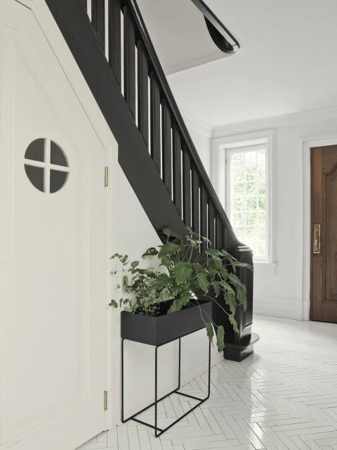 Skab et godt indeklima med planter i dit hjem