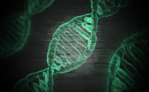 Genmutation som skyddar mot typ 2-diabetes kartlagd