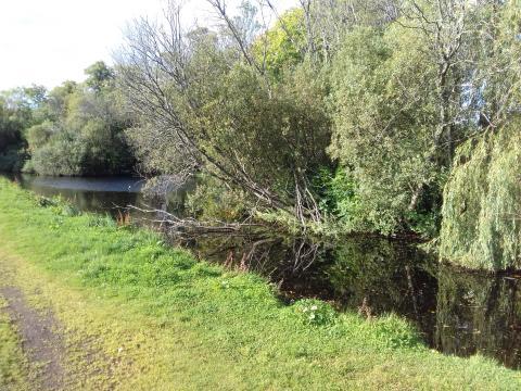 Forres duck pond maintenance to begin next week