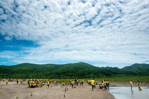 Panasonic Mangrove Reforestation 2016