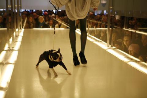 Dogs On Catwalk - NK Stockholm