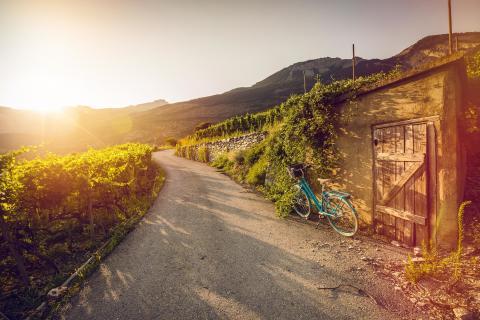 Weinerlebnisse im Wallis