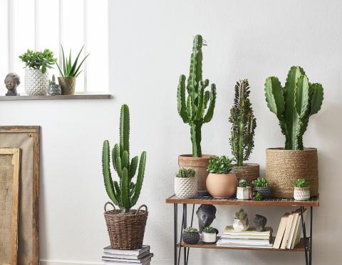 Kaktus och suckulenter Plantagen