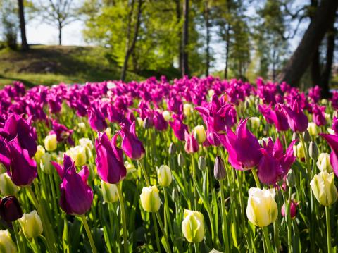 Var finns Sveriges mest älskade park?