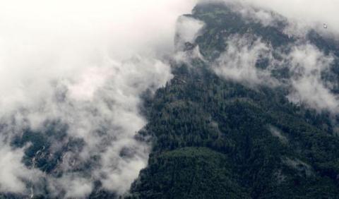 Fem framgångsfaktorer för att minska avskogning och uppnå hållbarhet