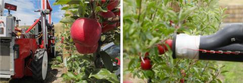 米国のスタートアップ企業「Abundant Robotics」へ出資 〜果菜農業での自動化推進を通じた省人化・生産性向上に貢献〜