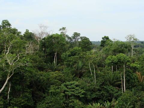 Skoven i Amazonas ryddes i rekordfart under Bolsonaro