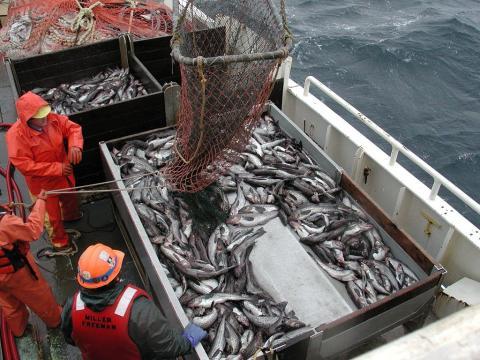 Svenska forskare och globala fiskeföretag bildar koalition för hållbara hav