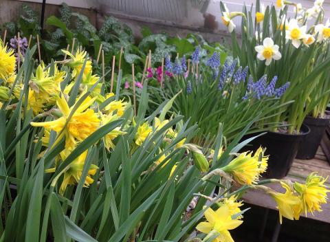 Workshop: Skapa med vårens lökväxter