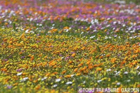 Tobu Treasure Garden(4)