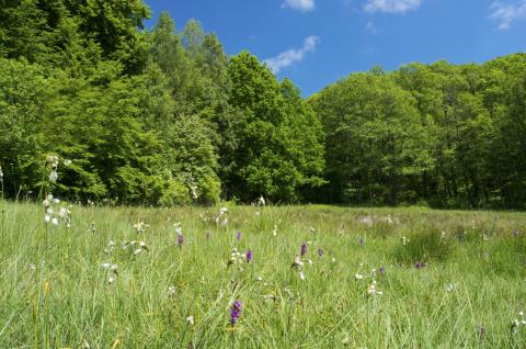 Värna värdefull växtlighet viktigt för framtiden