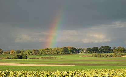 Möjlig ökad risk för pesticidläckage i framtida klimat