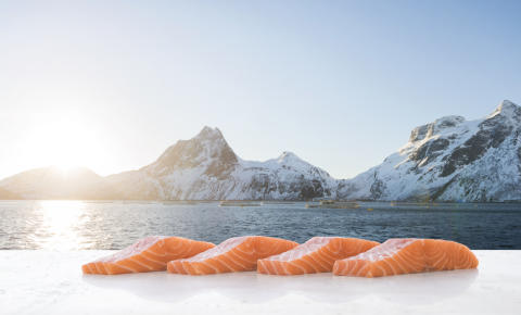 Strongest ever July for Norwegian seafood exports
