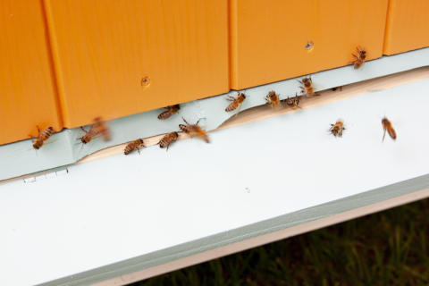 Bikupor i parken bidrar till biologisk mångfald och ger honung