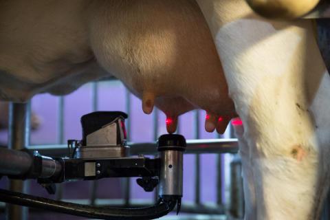 Melkeroboten gir store muligheter for å videreutvikle norsk landbruks unike fortrinn